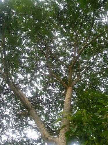 da série árvores - foto: arauto do futuro - 12-01-2010 - clique para ampliar