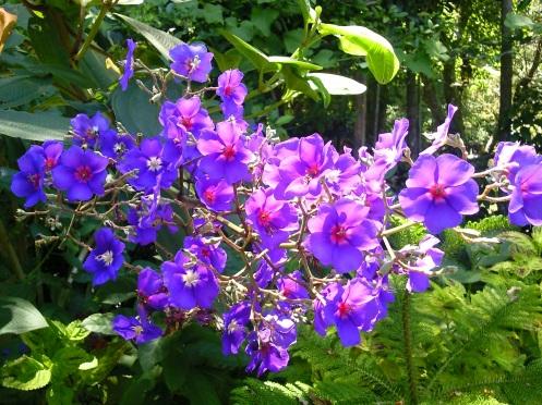 cores... da série flores... foto: arauto do futuro - 04-02-2010 - clique para ampliar