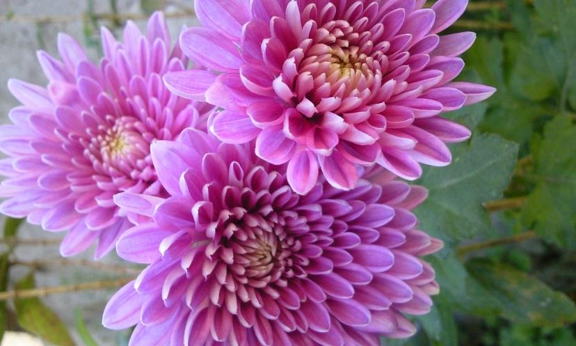 da série flores do jardim