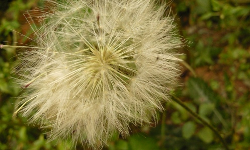 no jardim... clique para ampliar - agosto/2010 - foto arquivo pessoal